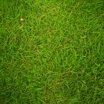 greengrass