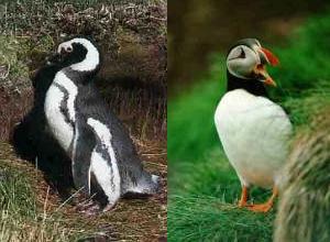 Penguin/Not a penguin