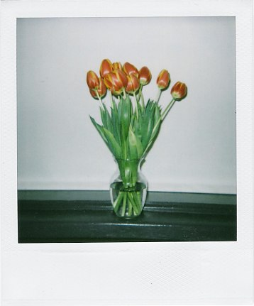 [Vase with tulips]