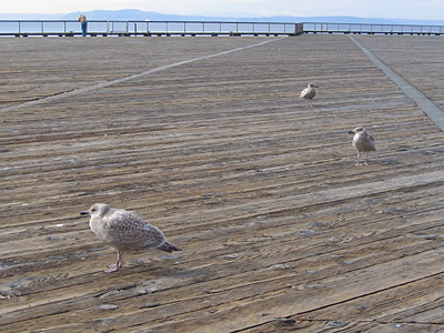 [Seagulls on pier]