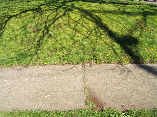[Shadows of tree branches across a grass hill and a sidewalk]