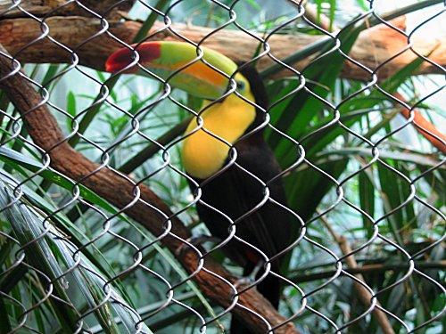 [toucan]